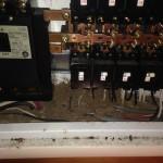 分電盤内の白蟻被害