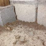 シロアリ蟻道発見