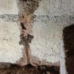 ブロック目地を加害する白蟻